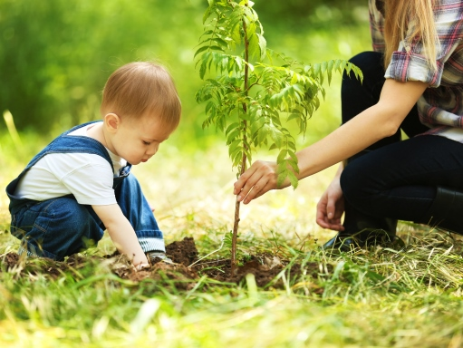 educator-tips/tree-planting-tips