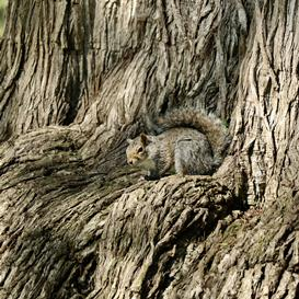 camouflage-nature-examples